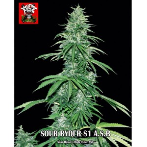Sour Ryder S1 Auto Super Big